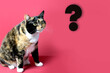 canvas print picture - adult domestic cat proudly sitting on red background, looks with huge enlarged eyes on a big question mark, concept of surprise