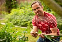 Portrait Proud Man Harvesting Fresh Green Onions In Garden
