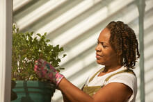 Female Plant Nursery Owner Pruning Plant In Sunny Greenhouse