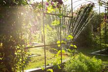 Sprinkler Watering Plants In Sunny Lush Idyllic Summer Garden