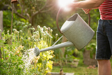 Man With Watering Can Watering Plants In Summer Garden