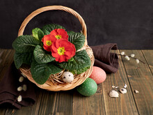 Basket With Red Primrose Pot Flowers And Pussy Willow On Dark Rustic Wooden Table. Painted Chick And Quail Eggs. Zero Waste Natural Arrangement In Red Green On Dark Brown Earth Colored Background.