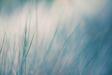 Wild Blue Grasses In A Forest. Macro Image, Shallow Depth Of Field. Abstract Nature Background