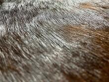 Fur Pelt