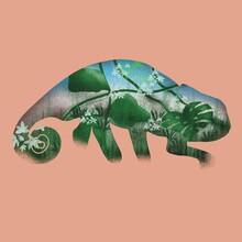 Reptiles Wildlife: Chameleon On Pink Background
