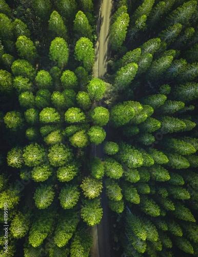 close up of a tree