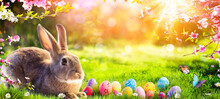 Easter - Cute Bunny In Sunny Garden With Decorated Eggs