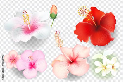 Obraz Tropical flowers set isolated on transparent background. - fototapety do salonu