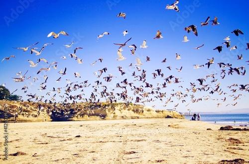 Photo Flock Of Birds Flying Over Beach