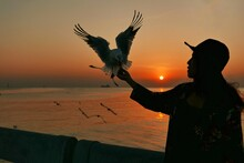 Young Woman Holding Seagull At Beach During Sunset