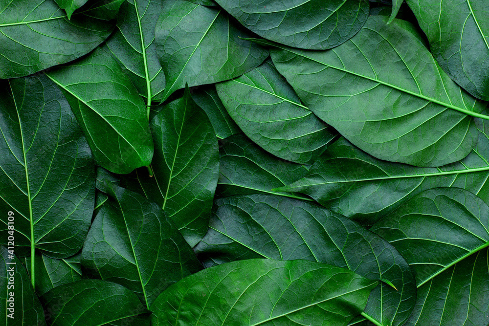 Fototapeta closeup nature view of colorful leaves background and dark tone