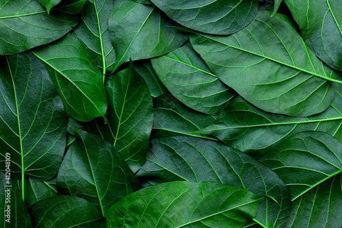 Fototapeta closeup nature view of colorful leaves background and dark tone obraz