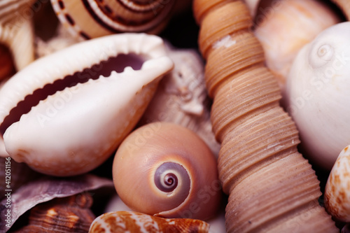 a lot of different empty sea shells on background, macro details Wallpaper Mural