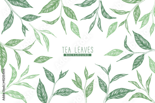 Slika na platnu Vector background with green hand drawn tea leaves and branches isolated on white background