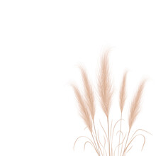 Tan Pampas Grass Branches On White Background. Floral Ornament Elements In Boho Style. Vector Illustration Of Cortaderia Selloana. New Trendy Home Decor.
