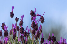 Close-up Of Purple Flowering Plants Against Sky