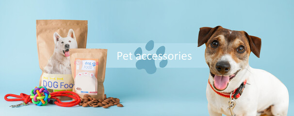 Cute Jack Russel terrier with tasty pet food and accessories on color background