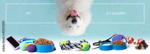 Canvastavla Cute Samoyed dog on color background