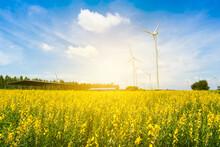 Wind Mill Generators Under Blue Sky On Sunset. Flower Grassland