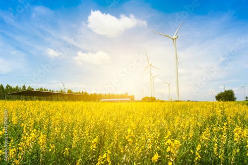 Wind mill generators under blue sky on sunset. Flower grassland - fototapety na wymiar