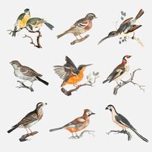 Hand Drawn Bird Vector Vintage Illustration Set