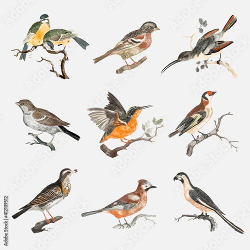Valokuva Hand drawn bird vector vintage illustration set