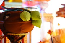 The Lotus Flower Is Placed On The Container Of The Monks During The Ordination Ceremony.