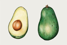 Green Avocado Vintage Vector Hand-drawn