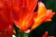 canvas print picture - Close-up Of Orange Flowering Plant