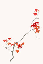 Traditional Japanese Maple Leaf Ornamental Element Vector, Artwork Remix From Original Print By Watanabe Seitei