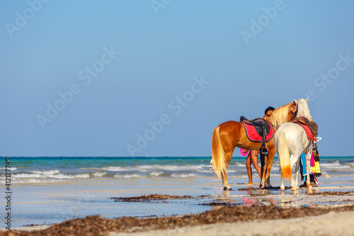 Tela Two horses stand on a sandy beach against the backdrop of waves