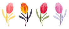 Set Of Different Colors Tulips With Leaves. Collection Of Hand Drawn Flowers For Wedding Cards, Postcards, Holidays. Vector Tulip Illustration Isolated On White Background EPS10