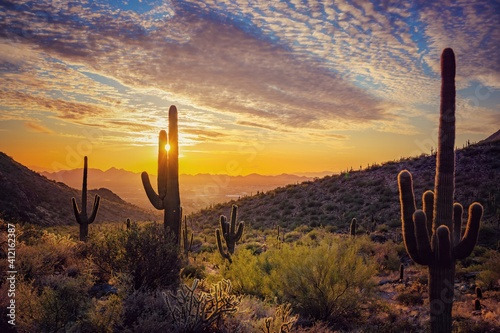 Fotografia Cactus Growing On Field Against Sky During Sunset