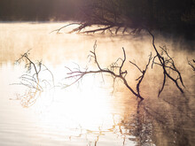 Dead Branches Rise Ghostly From The Lake