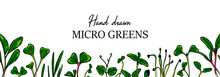 Hand Drawn Micro Greens Horizontal Banner. Healthy Vegetarian And Vegan Food Design For Company Logo, Print, Packages. Vector Illustration