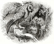 Barn Owl (Tito Alba) Landing On Nest In A Tree To Overwatch Its Cubs Peeping. Ancient Grey Tone Etching Style Art By Unidentified Author, Magasin Pittoresque, 1838