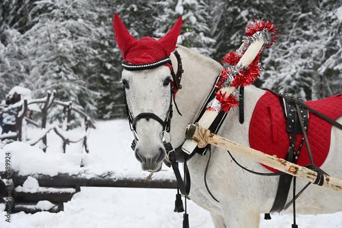 White horse with a festive red cap © Alexey Kuznetsov
