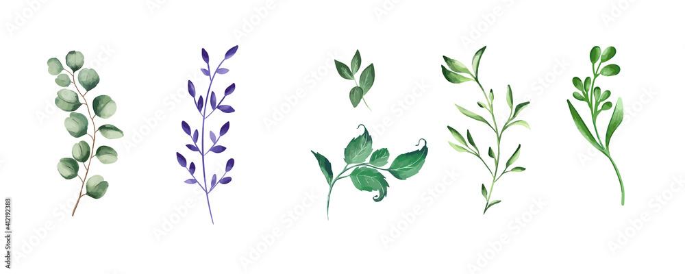Fototapeta Green realistic herbs. Eucalyptus, fern plant, greenery foliage plants