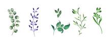 Green Realistic Herbs. Eucalyptus, Fern Plant, Greenery Foliage Plants
