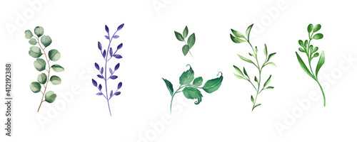 Canvas Green realistic herbs