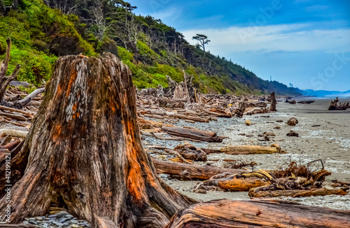 Trunks of fallen trees at low tide on the Pacific Ocean in Olympic, National Par Wallpaper Mural