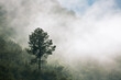 canvas print picture - Misty early morning horizontal landscape with a single tree on a mountain and lots of fog rolling in. South Africa.