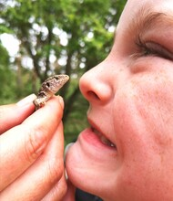 Little Boy Smile With Reptil