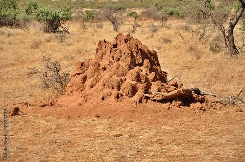Termitiera na sawannie (Afryka)