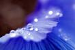 Leinwandbild Motiv Close-up Of Water Drops On Flower