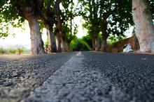 Carretera De Bosque
