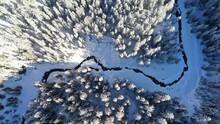 Bach Im Winter Mit Schneebedeckten Tannen
