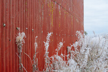 Frost Covered Weeds Against A Red Barn