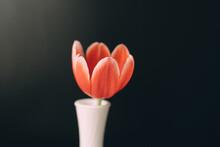 A Tulip In A Vase