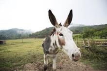 Donkey Portait